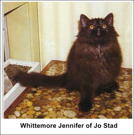 Whittemore Jennifer of Jo Stad, F, MCO n, 1968-03-02