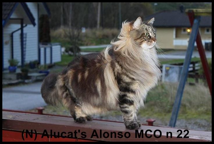 Alucat Alonzo t