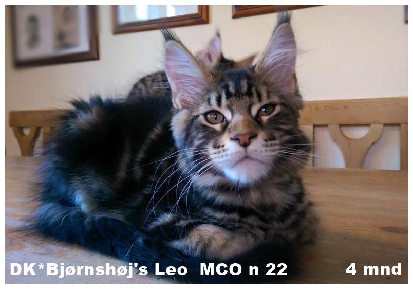 Bjørnshøj Leo MCO n 22 c